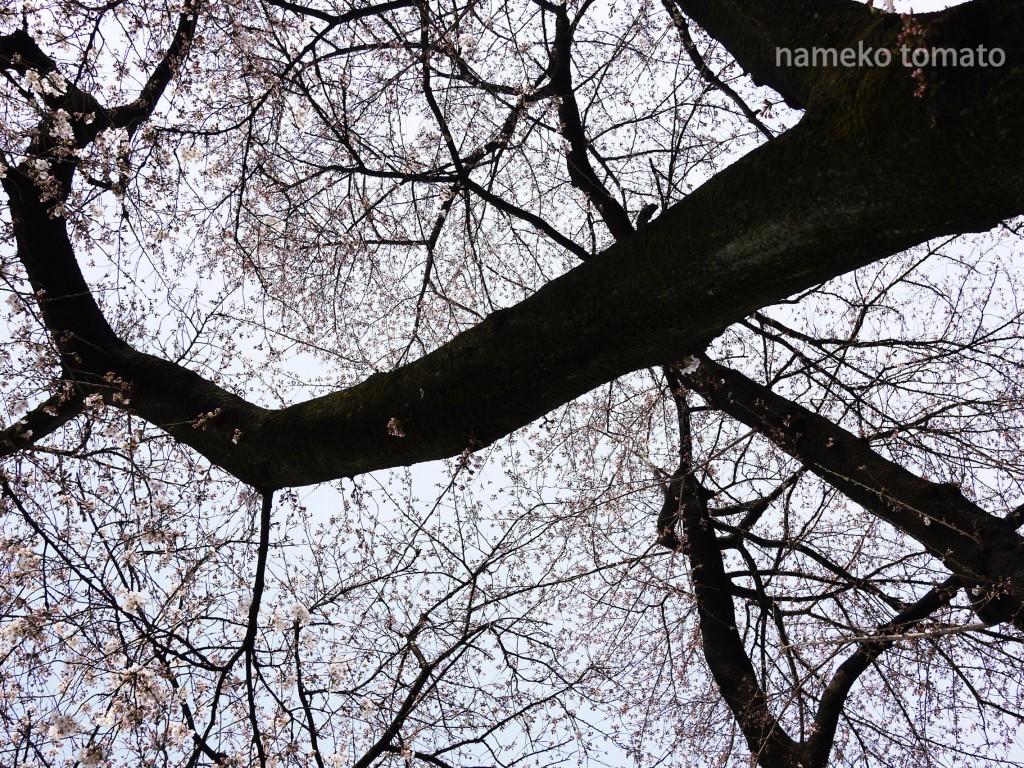 2015お花見01文字