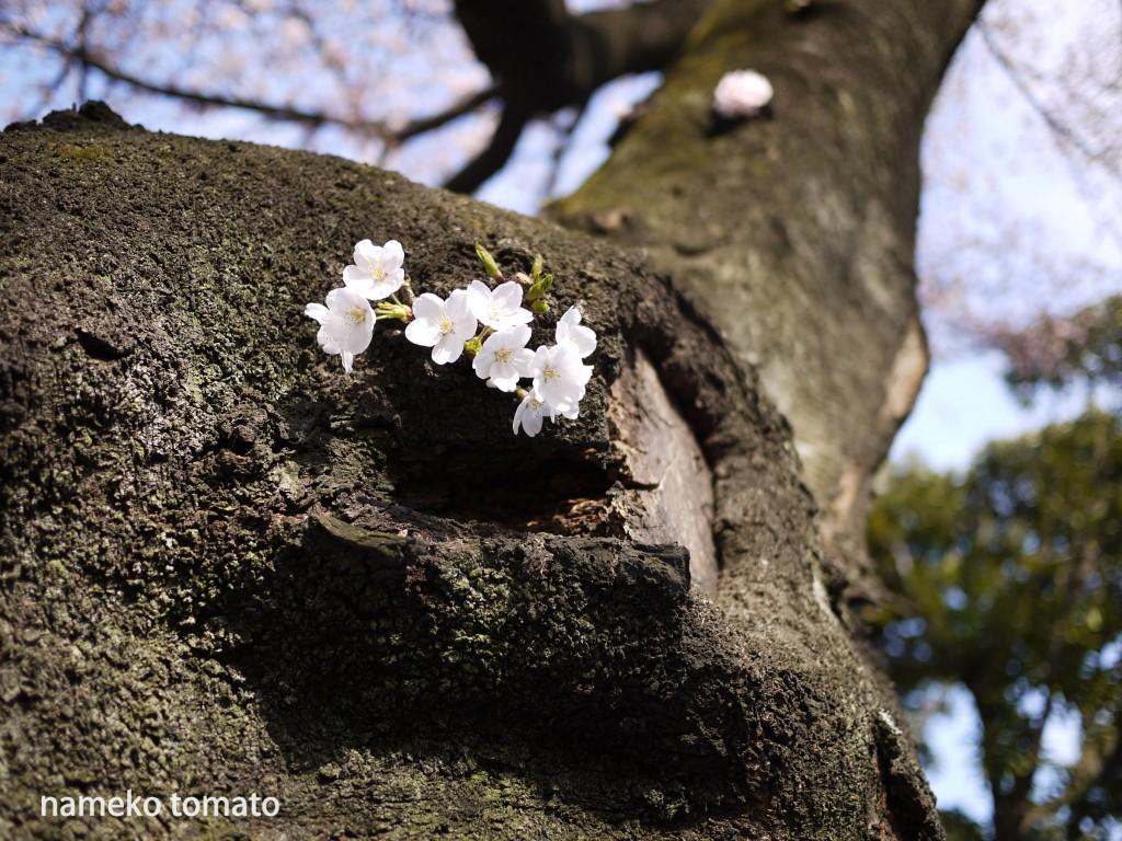 2015お花見03文字