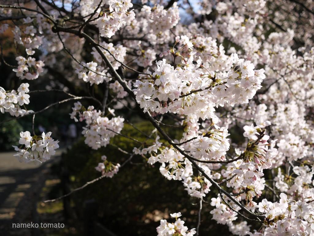 2015お花見7文字