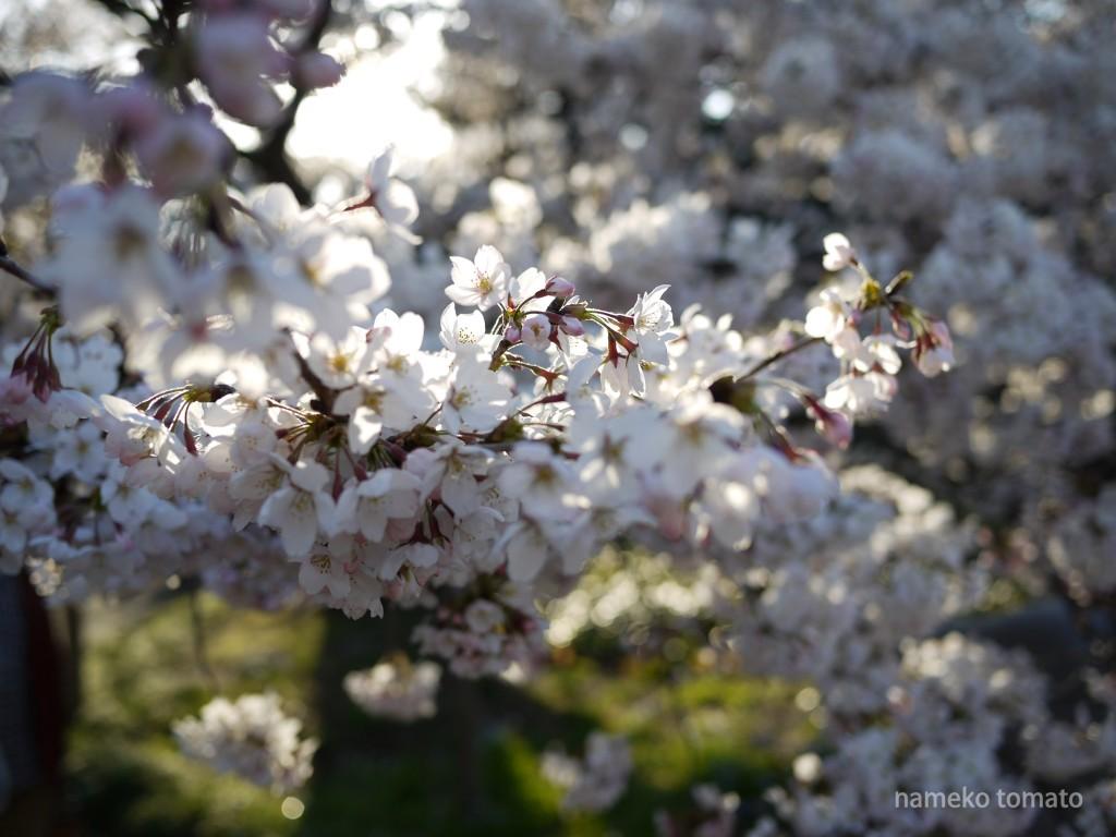 2015お花見9文字